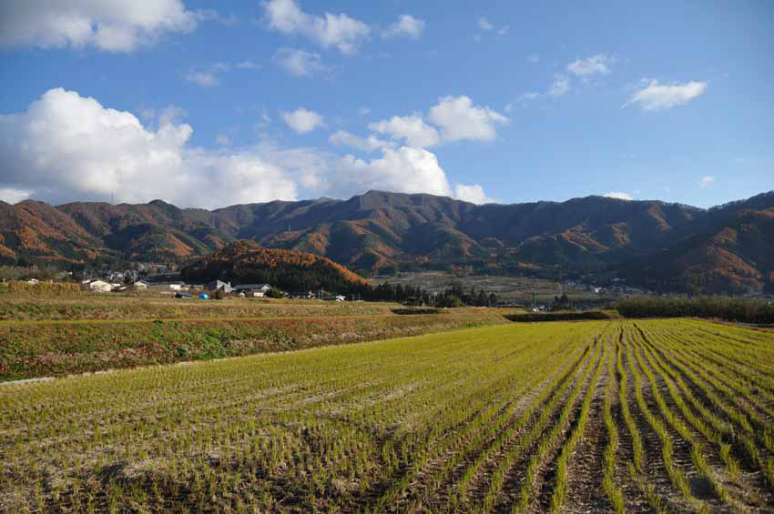 秋 収穫を終え里山のもみじはじまる (2010年11月18日)